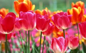 beautiful plants flower flowers petals garden nature plants beautiful delicate