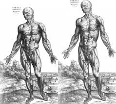 anatomy drawings of the human body human anatomy library