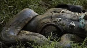 Vidio Film Ular Anaconda   video acting bintang film tv justru ditelan ular anaconda betina
