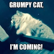 Image 9 Best Grumpy Cat - 9 best pet love images on pinterest funny memes meme maker and