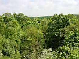 file above the tree tops geograph org uk 10187 jpg wikimedia