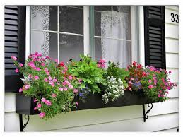 What To Plant In Window Flower Boxes - best flowers for window boxes gloria zastko realtors north