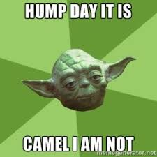 Hump Day Meme Funny - 37 best hump day meme images on pinterest ha ha hump day meme and