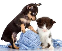cute puppies 2 wallpapers wallpapers puppy pinscher kitty cat cats dogs 2 animals