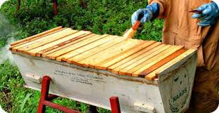 Harvesting Honey From Top Bar Hive How To Choose The Most Appropriate Beehive Type In Uganda