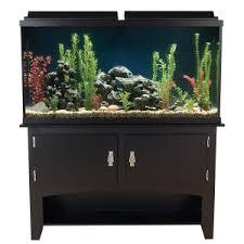black friday 2017 petsmart black friday sale 150 00 at petsmart includes 60 gallon tank with