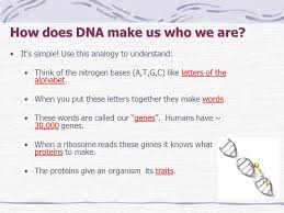 dna dna structure dna stands for deoxyribonucleic acid dna is