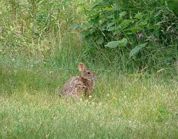 New Hampshire Wildlife images Something wild what does nh 39 s wildlife action plan do new jpg