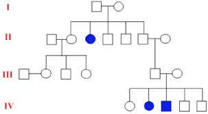 genetics practice problems pedigree tables the open door web site ib biology genetics pedigree charts