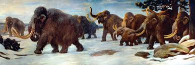 woolly mammoth dna mutations piled pre extinction dead