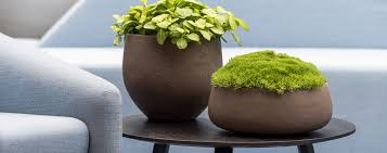 plant for office urban planters office plants living green walls interior