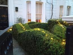 53 best structure hedges topiary and lines images on