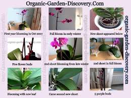 Orchids Care Growing Orchids Indoors Gardening Advice