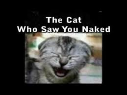 Naked Meme - the cat who saw you naked youtube