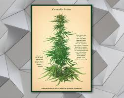 quotes vintage cannabis wall art print poster marijuana art