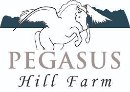 pegasus hill farm is the place in wnc for horseback riding and