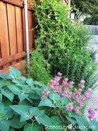 Texas Landscape Plants by Lose Plants This Summer Replace Them With These Water Wise Shrubs