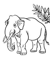 37 coloring pages baby animal images drawings