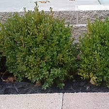 exterior design natural outdoor and garden design with fresh