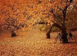 174 autumn photoland images fall autumn