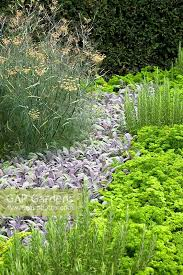 gap gardens ornamental planting of herbs in a border in front of
