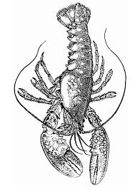 coloring page lobster img 13287