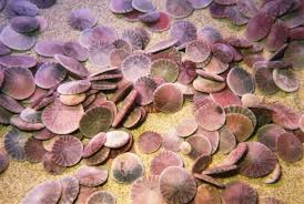 where to buy sand dollars sand dollar facts and information