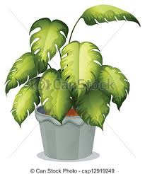 eps vector of an ornamental plant in a pot illustration of an