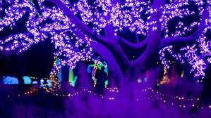 Botanical Gardens Atlanta Lights Out About For November December