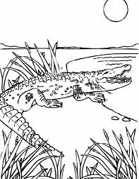 88 alligator coloring pages crocodile coloring pages free