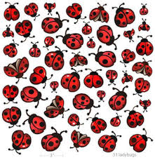 about ladybug tattoos on pinterest tattoos for ladies luck