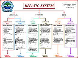 symptoms of hbv light colored stool terrain chart for the hepatic system