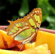 butterflies touch bright hide animals butterfly wonderful