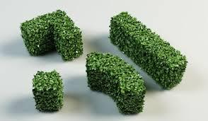 model hedge bushes