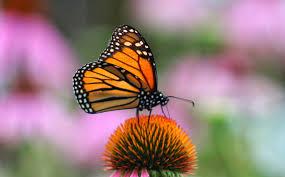 building butterfly gardens iowa radio