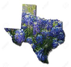 texas state shape with bluebonnets stock photo picture and