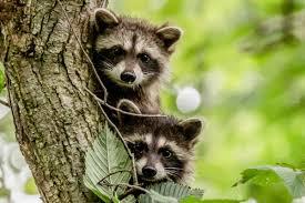 Indiana wildlife tours images Bloomington indiana tourism ecotour nature scenic jpg