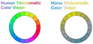 How To Tell If A Horse Is Blind Vision In Horses More Than Meets The Eye Features Horsetalk Co Nz