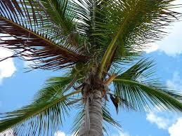 Bahamas Flag Meaning Freeport Bahamas