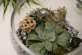 caring for succulents in your terrarium and garden