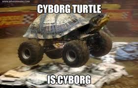 Turtle Memes - buggy turtle what s meme funny pinterest turtle meme