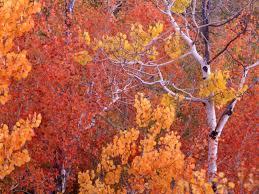 wallpapers u003e fall colors
