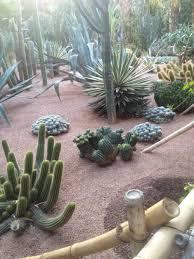 garden with desert plants including cactus long lasting desert