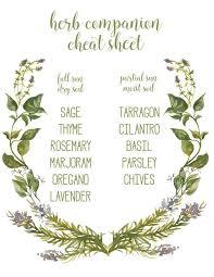 Indoor Herb Garden Ideas by Best 25 Diy Herb Garden Ideas On Pinterest Indoor Herbs Herb