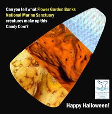 is halloween a national holiday for students flower garden banks national marine sanctuary