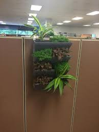 cube kit indoor cubical vertical garden living wall planter kit