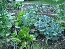 c permaculture u0026 vegetable gardens habitat horticulture pnw