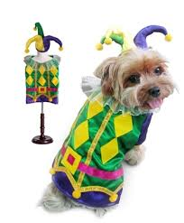 mardi gras jester ribbon dog harlequin mardi gras costume poochieheaven