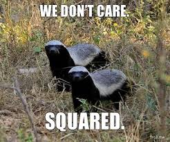 Honey Badger Meme - honey badger don t care life pinterest honey badger honey