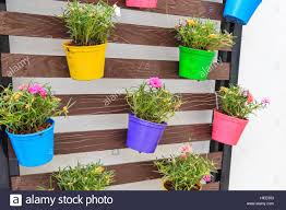 portulaca oleracea in color planter box hanging on wooden wall